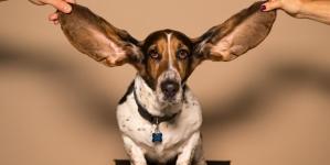 Toe aan een gehoorapparaat: wat komt er bij kijken?