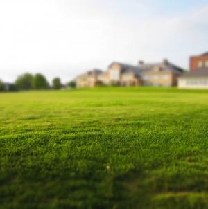 Jouw gras is altijd groener
